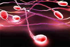 Привлекательные мужчины теперь используют свою сперму с умом